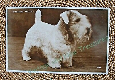 Vintage Antique White SEALYHAM TERRIER Dog Postcard RPCC - Ready to be Framed