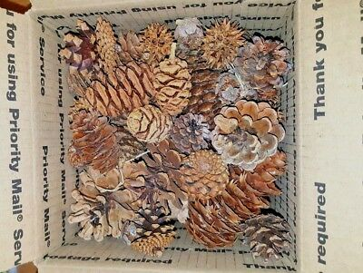 Assorted Pine Cone Mix Holiday Craft Variety Christmas Forest Nature