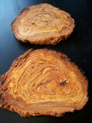 2 x EUCALYPT BURL Craft Slices