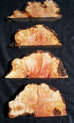 4 x TASMANIAN MYRTLE BURL Craft Slices
