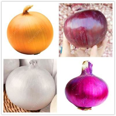 100 pcs/bag Giant Onion Yellow Sweet Spanish seeds vegetables germination 95% on