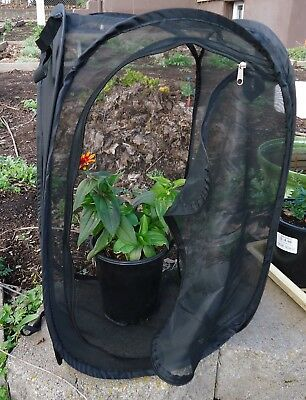 Butterfly Cage/Habitat -- Parasite Proof Mesh COLLAPSIBLE