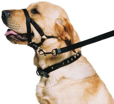 Ancol - Dog Training Halter - Head Collar - Helps Stop Pulling - Size: Large