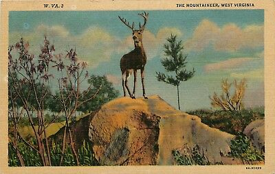The Mountaineer, West Virginia, WV, Buck, 1936 Linen Vintage Postcard e4093