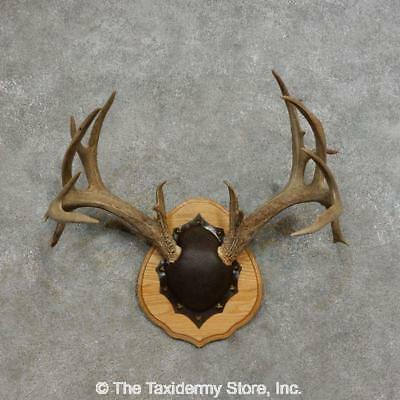 #17285 P   Whitetail Deer Antler Plaque Taxidermy Mount For Sale
