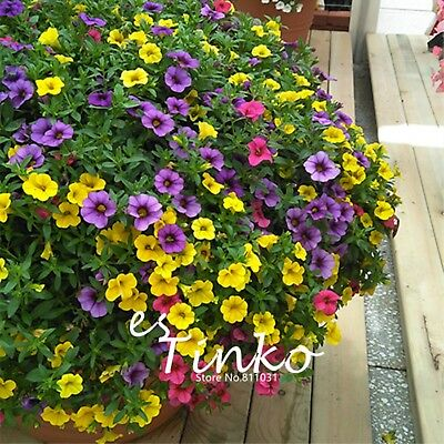 100pcs Calibrchoa 'Million Bells' Seeds Mix-colors Calibrchoa Flower Seed Bonsai