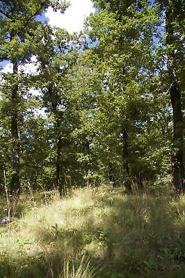 Oak Forest Plot in Bulgaria for log cabin or wood Bulgarian property house land