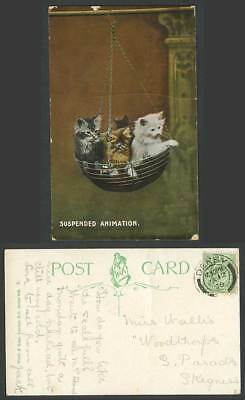 Cats Kittens in Hanging Basket, Suspended Animation Cat Kitten 1909 Old Postcard