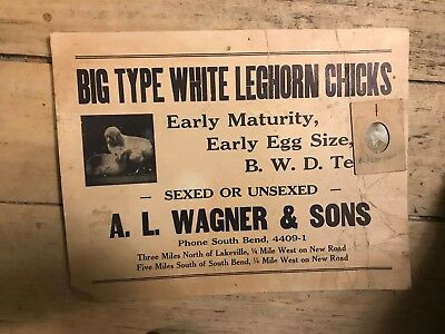 RARE 1915 Antique Advertisement Chickens Identified With Photo Indiana Cardboard