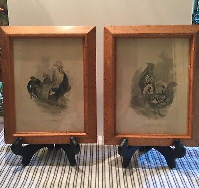 TWO 8x10 FRAMED VINTAGE ANTIQUE PRINTS OF CHICKENS IN WOODEN BLK/GREYS/BLUE