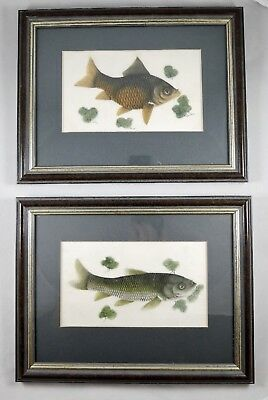 Detailed Pair Antique Pith Rice Paper Chinese Fish Watercolours c19th