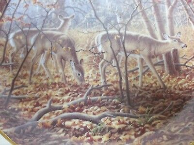 Danbury Mint collectors plate AUTUMN ENCOUNTER by Larry Zach-Whitetail deer