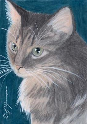 ACEO original pastel drawing tabby maine coon  cat chat by Anna Hoff