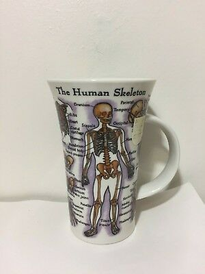 Dunoon Human Body Muscles Skeleton Informative Stoneware Coffee Mug Jane Goodwin