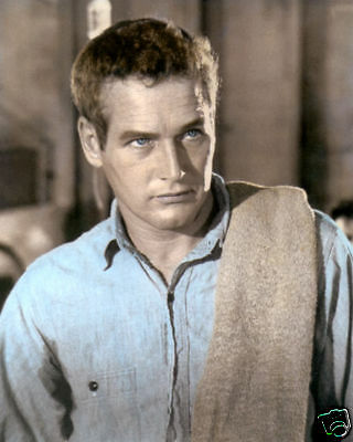 """PAUL NEWMAN COOL HAND LUKE 1967 HOLLYWOOD ACTOR 8x10"""" HAND COLOR TINTED PHOTO"""