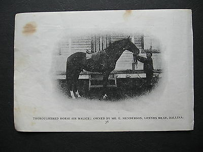Thourghbred  Sir Malice OWNED BY E Henderson Lennox Head Ballina