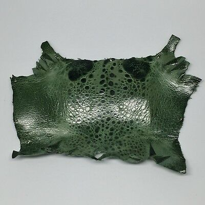 Bufo Marinus Cane Toad Dyed Leather Craft Frog Collectible Green
