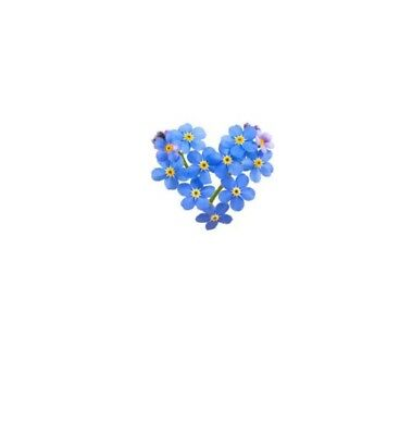 50 X Forget Me Not Seeds In Sealed Pouches For Use In Memory Keepsake Envelopes