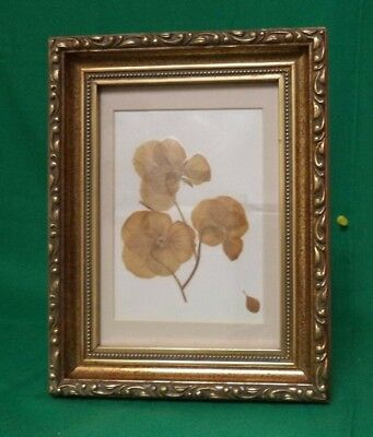 Vintage Dried Pansies In Excellent Gold Frame From A Galena Frame Shop