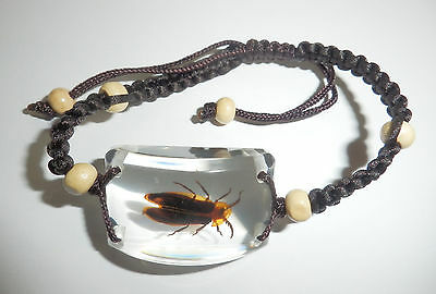 Insect Bracelet Golden Edge Firefly Lychnuris analis Specimen Clear