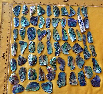 New Zealand Paua / Abalone Shell Pieces, 100 grms / 3.5 oz's .