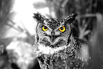 Owl , animal black and white High Quality wall Art poster Choose your Size