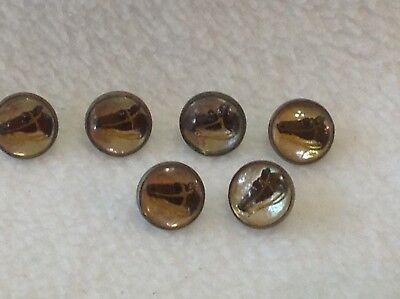 Vintage Dome Glass Horse Head Buttons , Lot Of 6