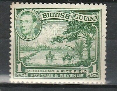 1941 BRITISH GUIANA 1c PLOUGHING RICE FIELD SG 308 L/M/MINT