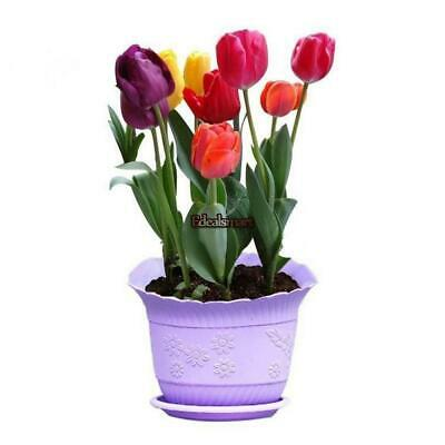 7 Colors Perfume Tulip Seed Decor Flower Bonsai Seeds Home Garden Potted ES88 02