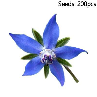 Premier Seeds Direct Borage Seeds Pack of 200 Seeds Re
