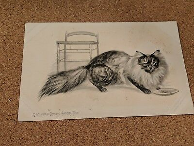 "Greeting Vintage postcard. Cat. Pencil sketch. Long Haired ""Smoke"" Angora Tom."