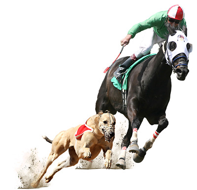 HORSE & GREYHOUND POWER EARNER BETTING SYSTEM- Betfair/ Betdaq Betting System