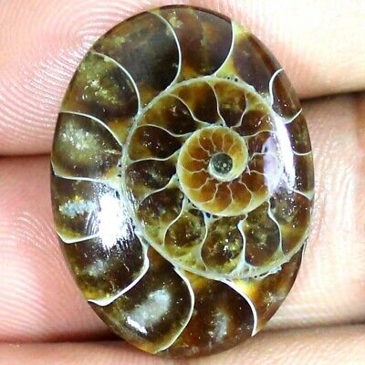 39.70 Cts 100% Natural AMMONITE FOSSIL Oval Cabochon ~23x31x6 mm~ Loose Gemstone