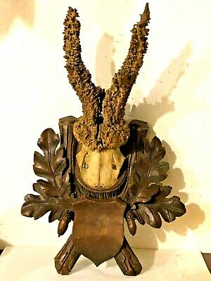 EXTREMLY RARE WIGS ROE BUCK ANTLER MOUNT DEER CARVED PLAQUE BLACK FOREST c1900