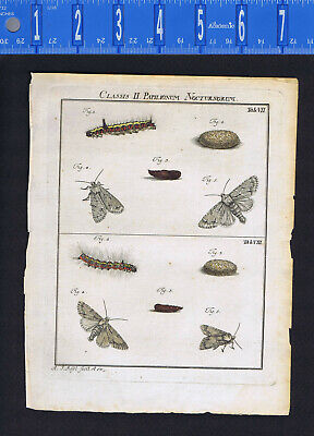 Butterfly-Moth-Caterpillar-Pupa - Roesel/Rosel Insecten 1760 Engraving