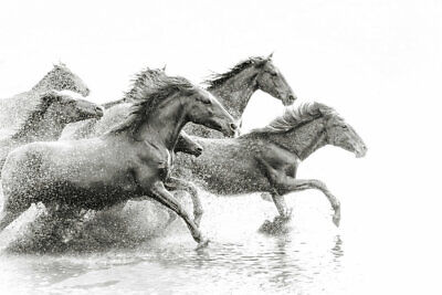Home Wall Art Decor Animal Running Horse oil Painting picture Printed on Canvas