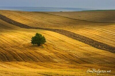 Agricultural Proved Business For Sale In Bulgaria (Eu) Full Businesses