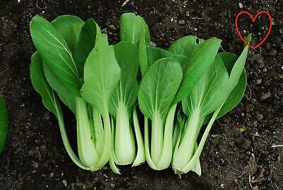 Vegetable Pak Choi White Stemmed (Chinese Cabbage) Seeds