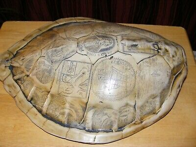 taxidermy turtle shell.scrimshaw.faux.(not real),great display,rare item,repro.