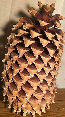 """Coulter """"Widowmaker"""" Pine Cone 13"""""""