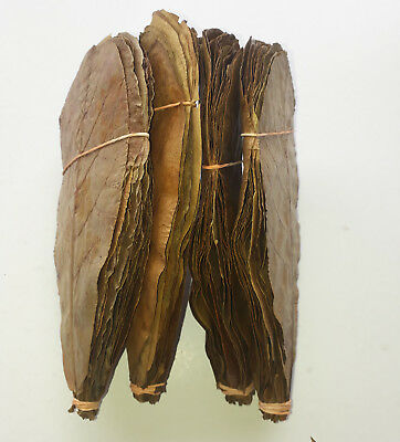 "100 Pieces 7"" Best Catappa Ketapang Indian Almond Leaves Shrimp Betta Discus"