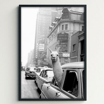 NEW Llama in New York Taxi 1950s Art Print by Hello We Make Stuff