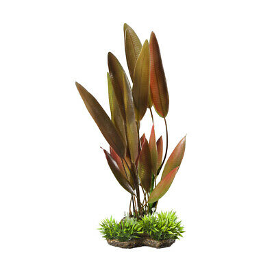 Elive Natural Elements Plants Red Crypt Large 9 10 Inch