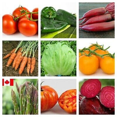 Organic Garden Vegetable Seeds NON Hybrid Heirloom 66 Seed Varieties NON GMO