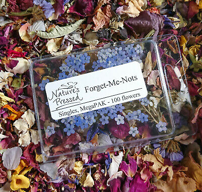 PRESSED FORGET ME NOT FLOWERS , DRIED FLOWERS , 100 Real Forget Me Nots