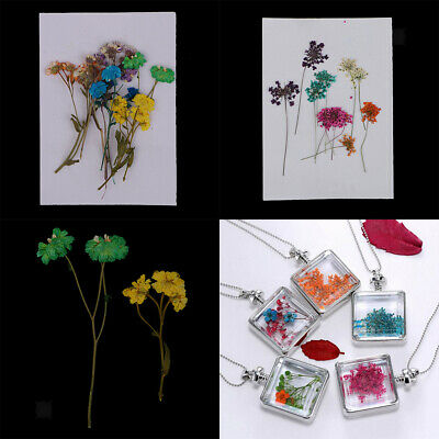 20pcs Pressed Bunch of Colourful Flowers Organic Floral Crafts