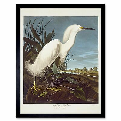 Havell Audubon American Snowy Heron Egret Zoology 12X16 Inch Framed Art Print