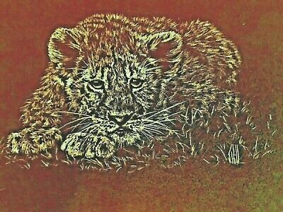 Ink Drawing Baby Tiger 100 years old from England Black Canvas Signed