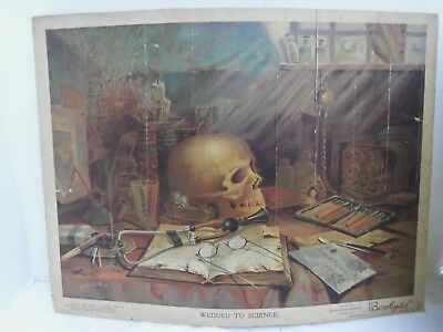 Antique 1895 Palisade Mfg Borolyptol Medicine Science Advertising Poster Skull