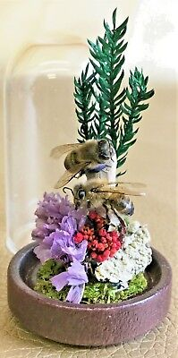 M61 Taxidermy Entomology Miniature Victorian Style Small REAL Honey bee Dome
